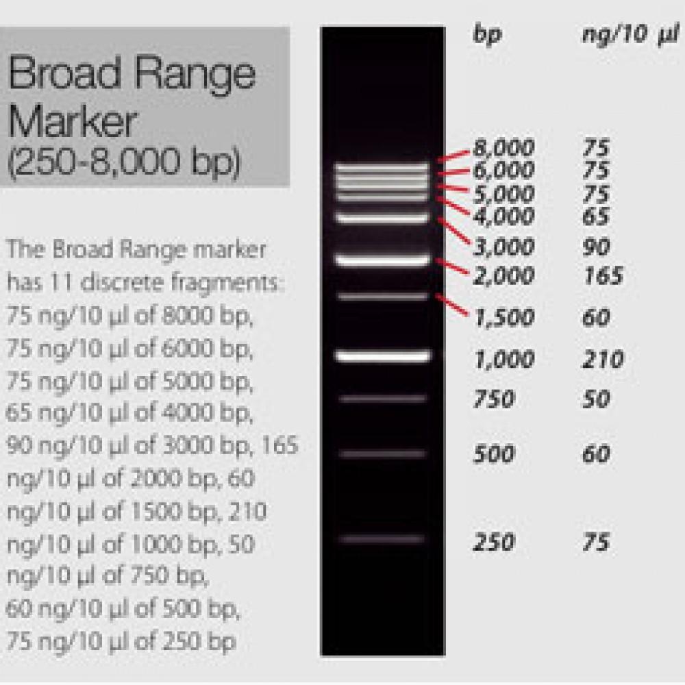 Broad Range Marker